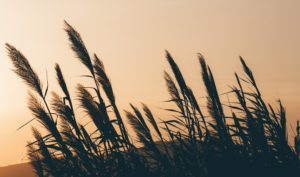 a propos-naturopathie-santé-au-naturel